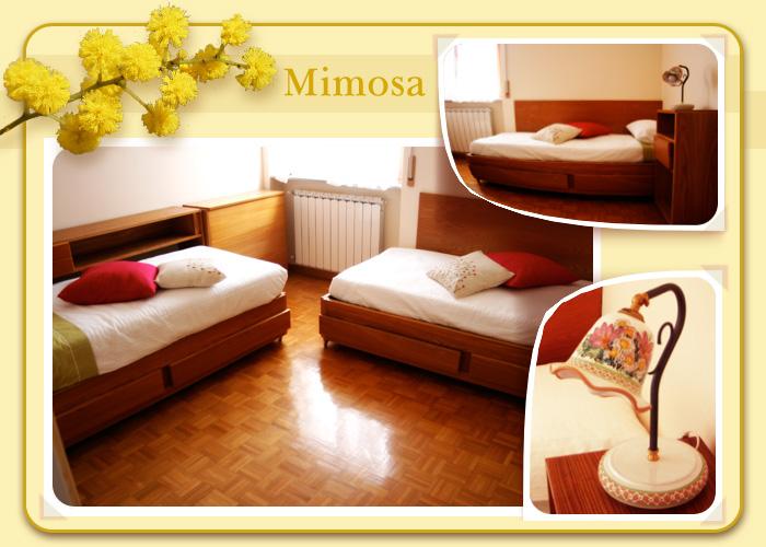 La camera Mimosa